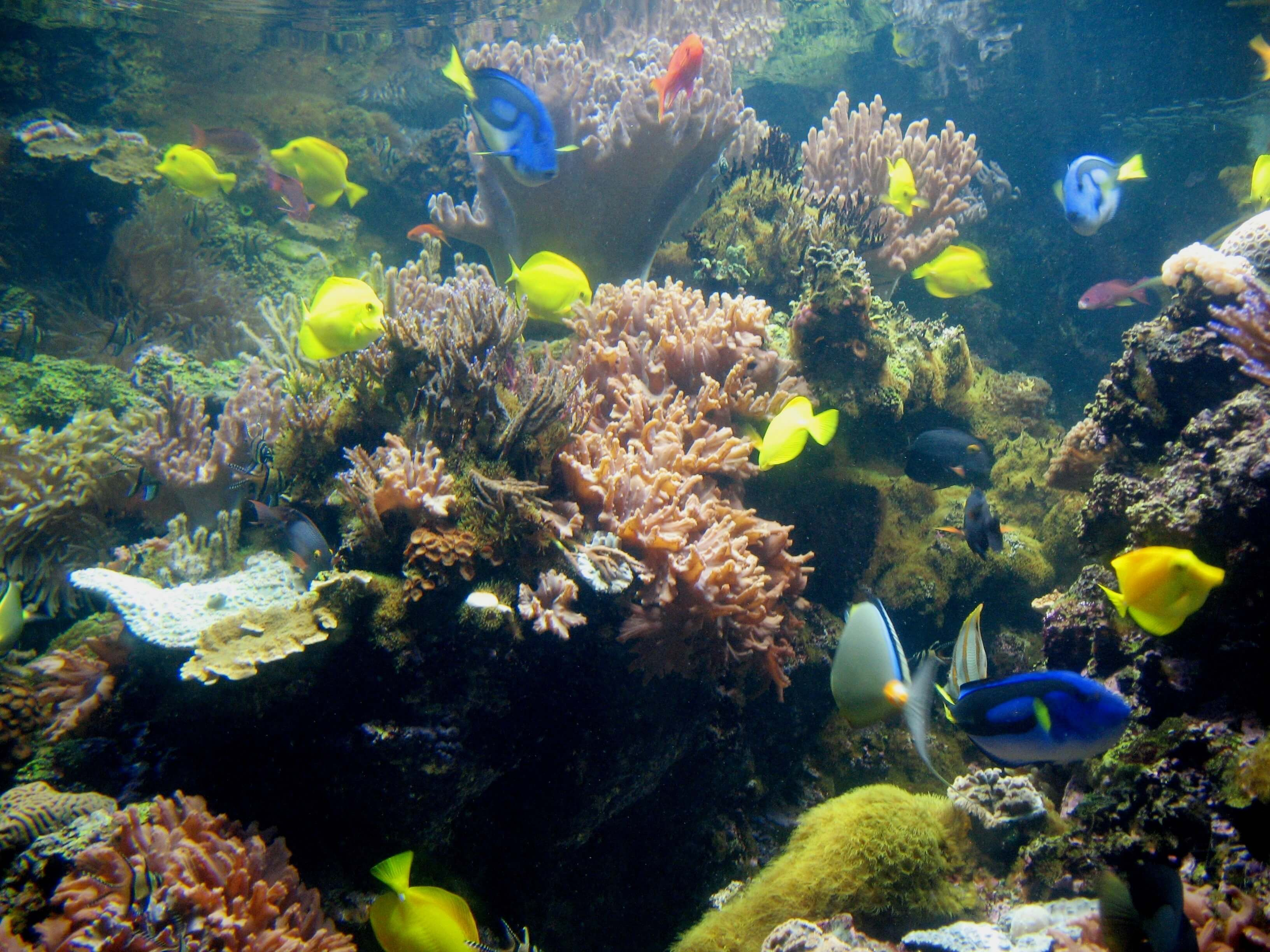 Swimming with the fish in charm city for Reef aquarium fish