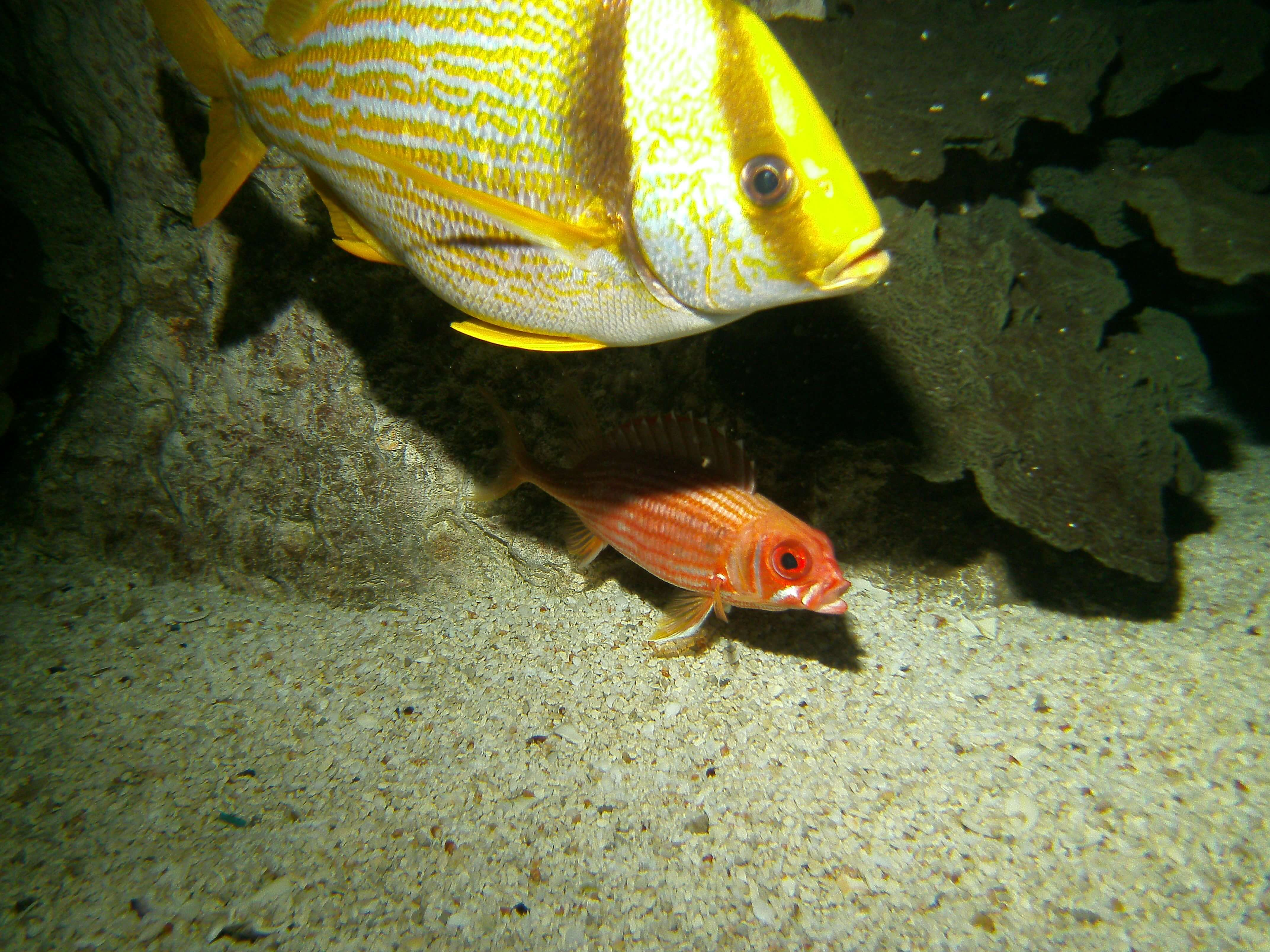 Freshwater fish jobs winnipeg - Swimming With The Fish In Charm City