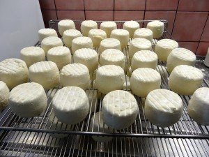 Goat cheese dairy in Burgundy Photo by Maurie O'Connor