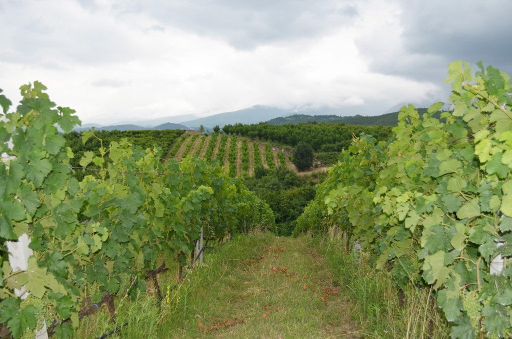 The vineyards of Naoussa