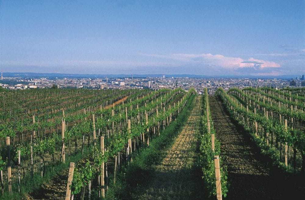 View of Vienna, Austria, from the Nussberg. © Austrian National Tourist Office / Photographer: Diejun.