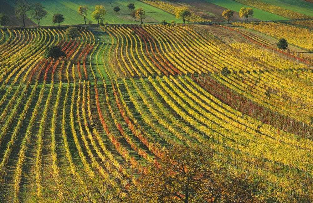 Autumn in Burgenland, Austria.