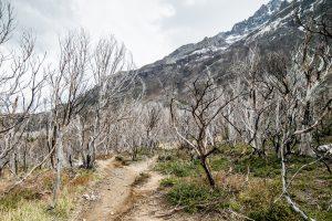 Patagonia Burned Trees