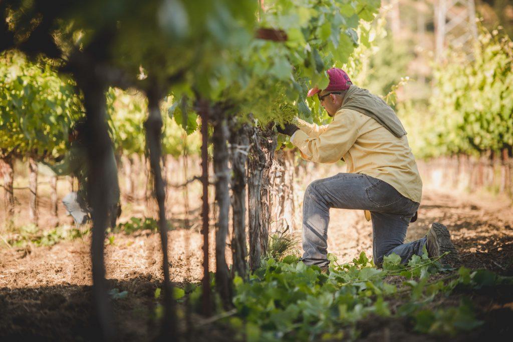Vines and wine maker of Crocker & Starr. FWT Magazine.