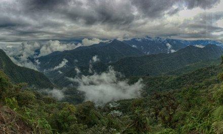 Where Are the Birds of Ecuador? Everywhere!