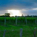Ata Rangi: One Of New Zealand's Best Wineries