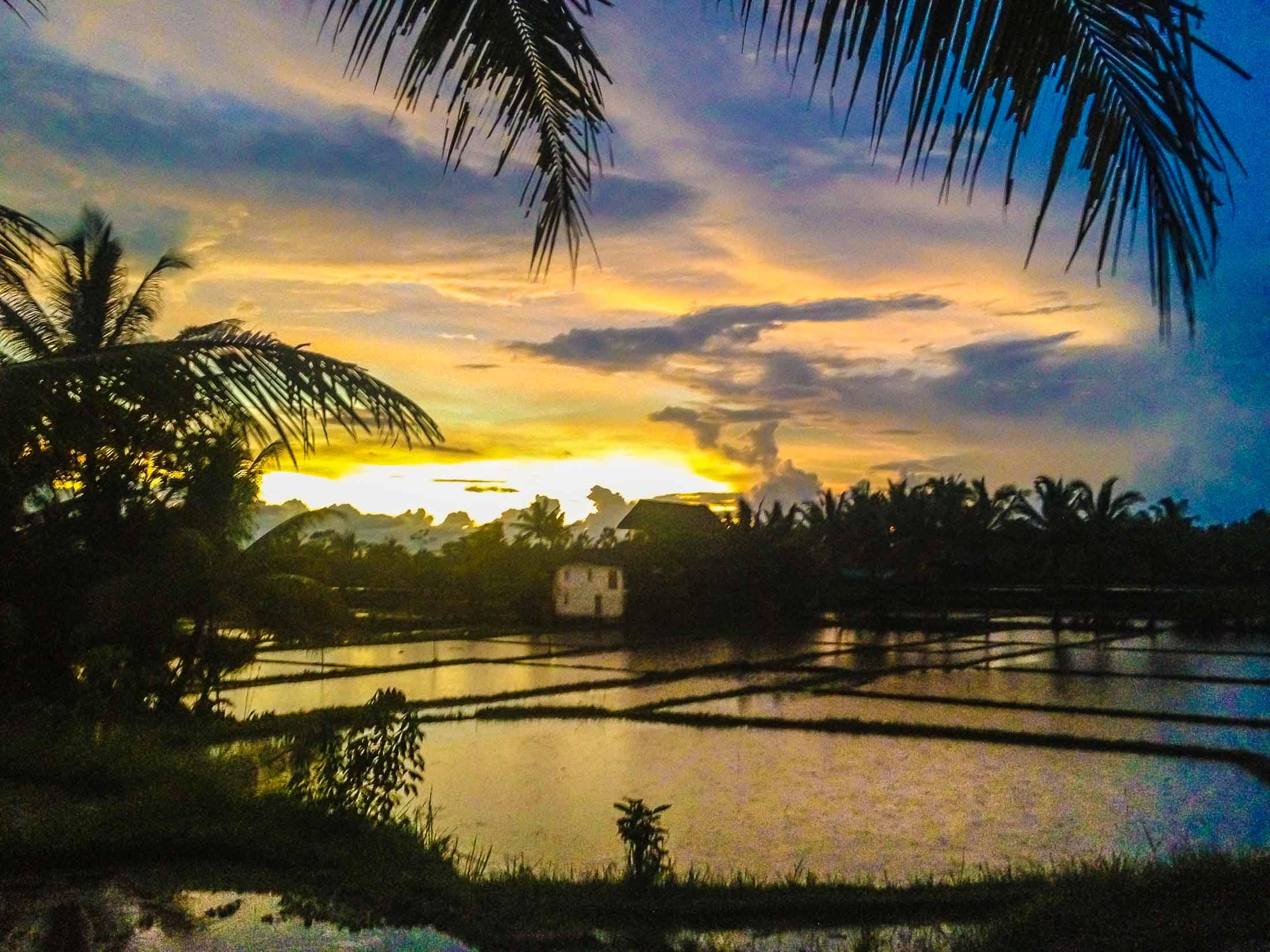 Subak rice terraces, Ubud, Bali