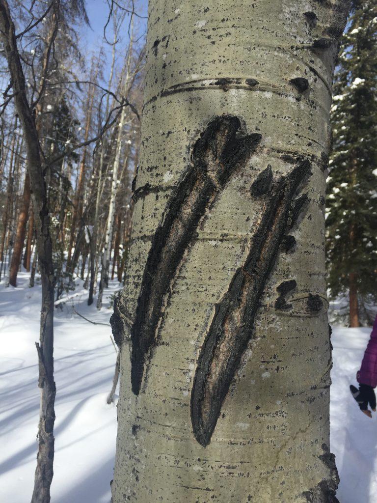 Colorado bear claw marks. FWT Magazine.