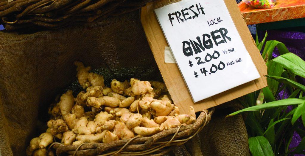 Ginger grows prolifically in this fertile region. (c) Sunshine Coast Destination Ltd