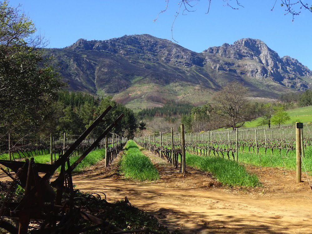 Delheim Estate in South Africa's beautiful Stellenbosch region © Maurie O'Connor.