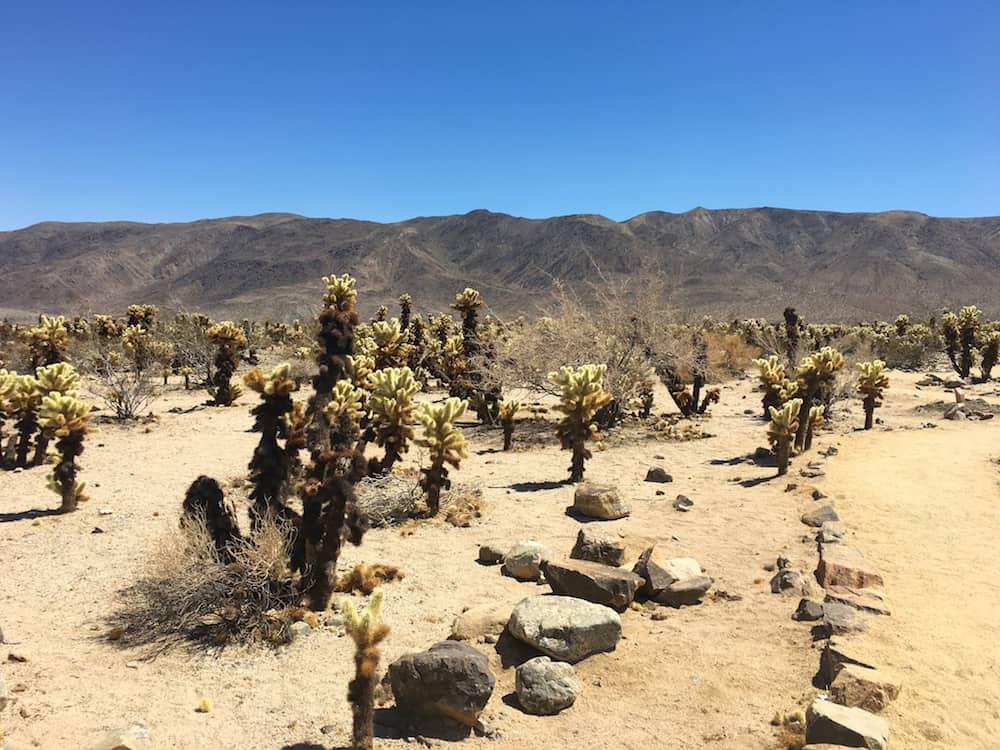 Explore desert parks near LA, like Joshua Tree National Park. FWT Magazine.