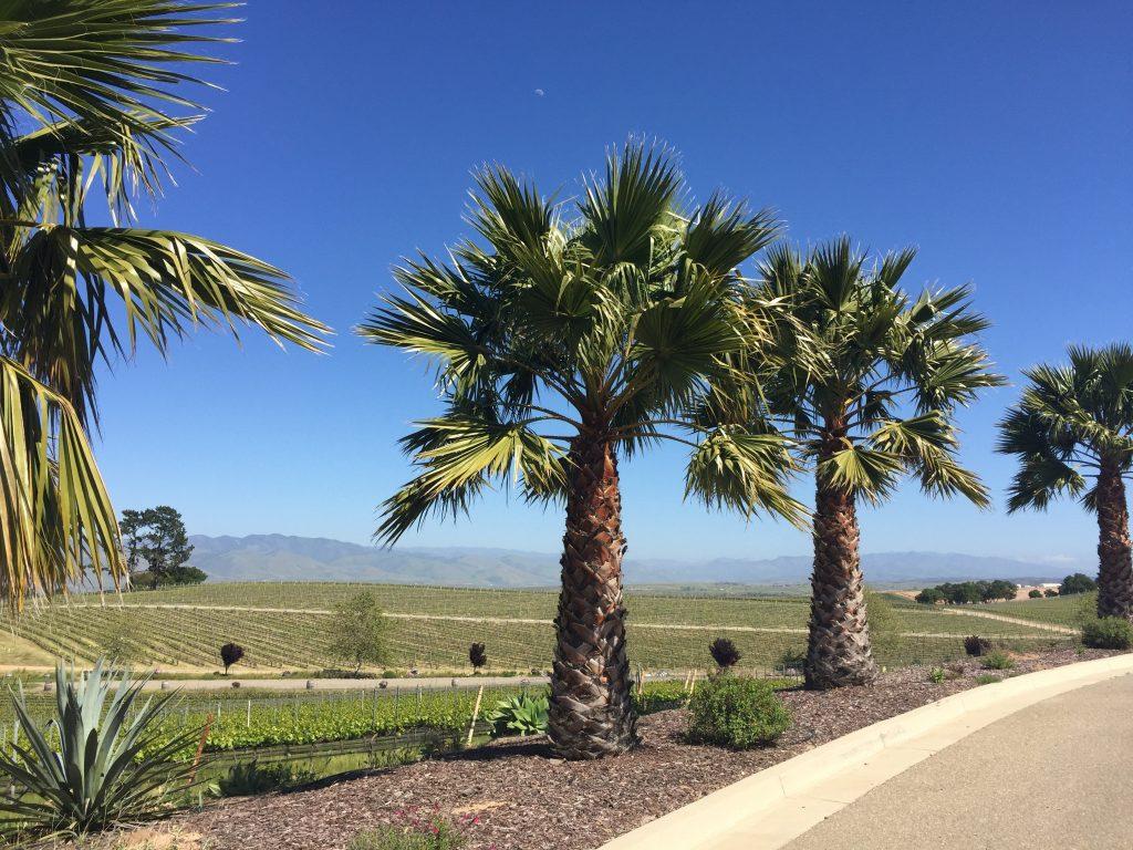 Santa Maria Valley winery. FWT Magazine.