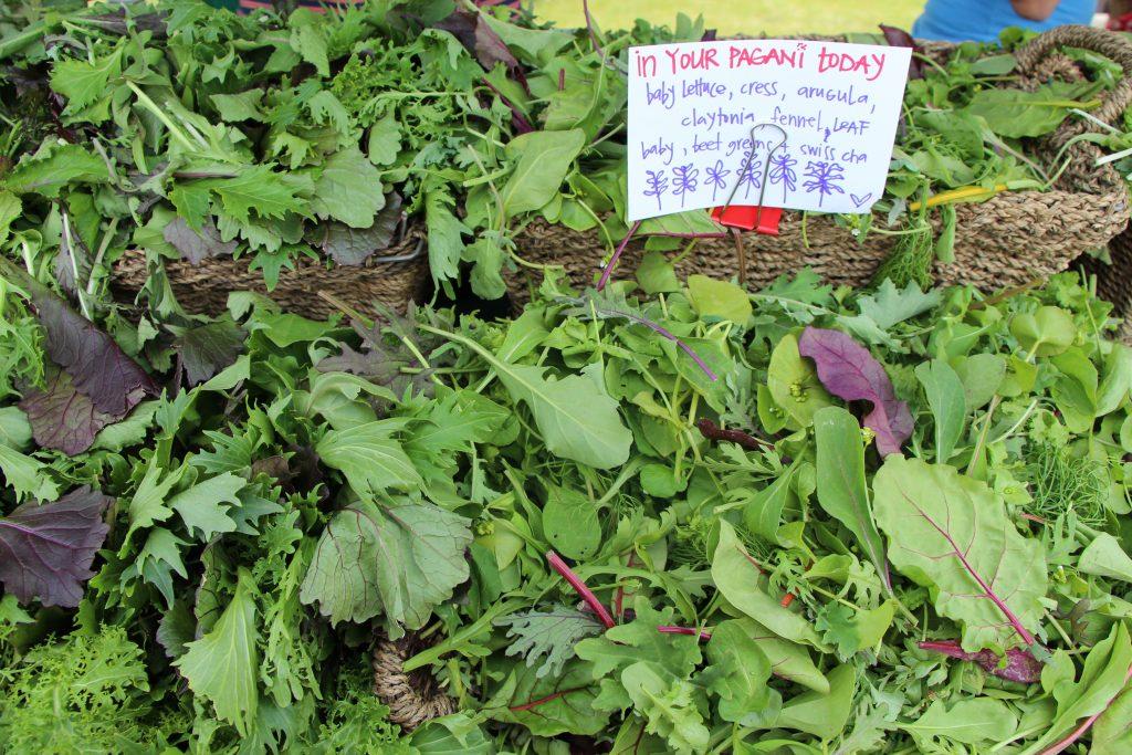 Salad greens for sale at Fireweed Community Market © Christine Salins