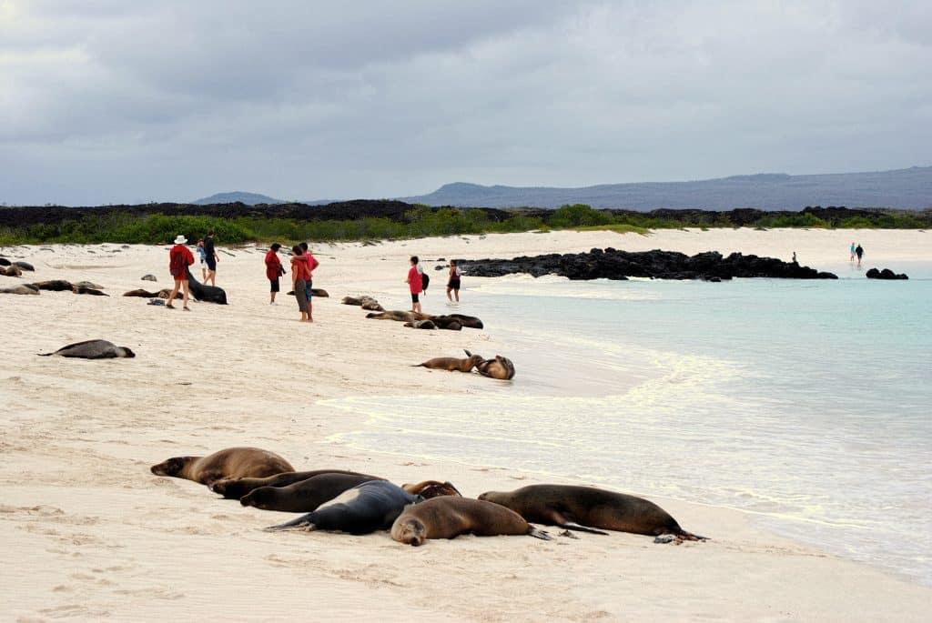 Cerro Brujo Beach, Galapagos Islands. FWT Magazine.