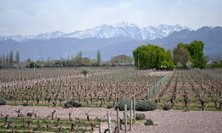 Malbec World Day: Celebrating Malbec Wines