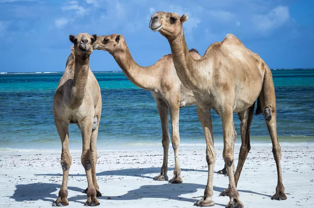 Diani Beach, Africa. FWT Magazine.