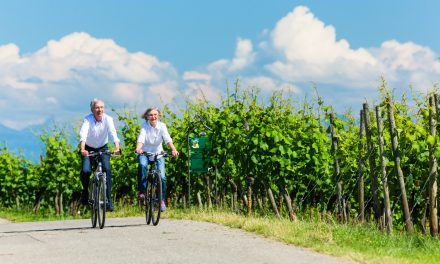 6 Reasons to be a Wine Tourist