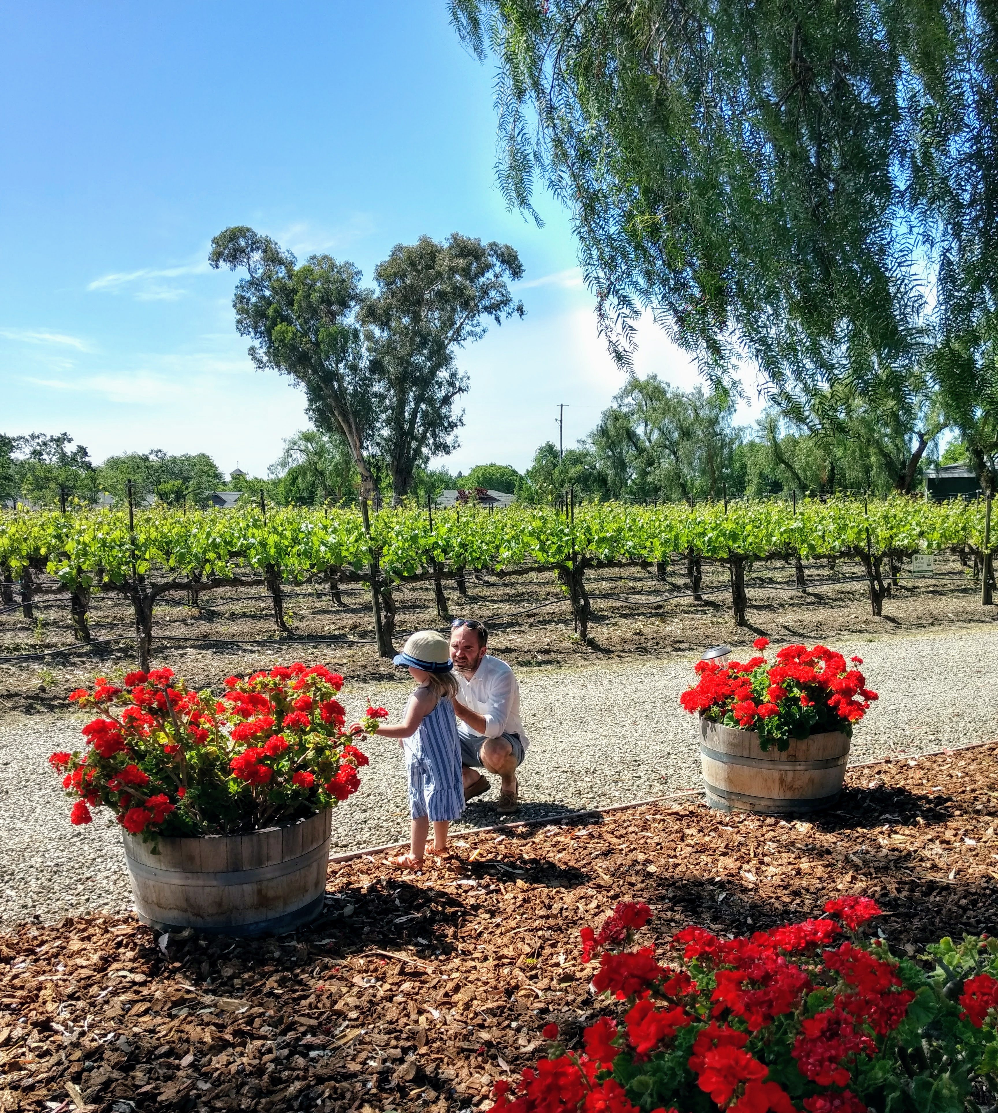 Retzlaff Vineyards Livermore AVA