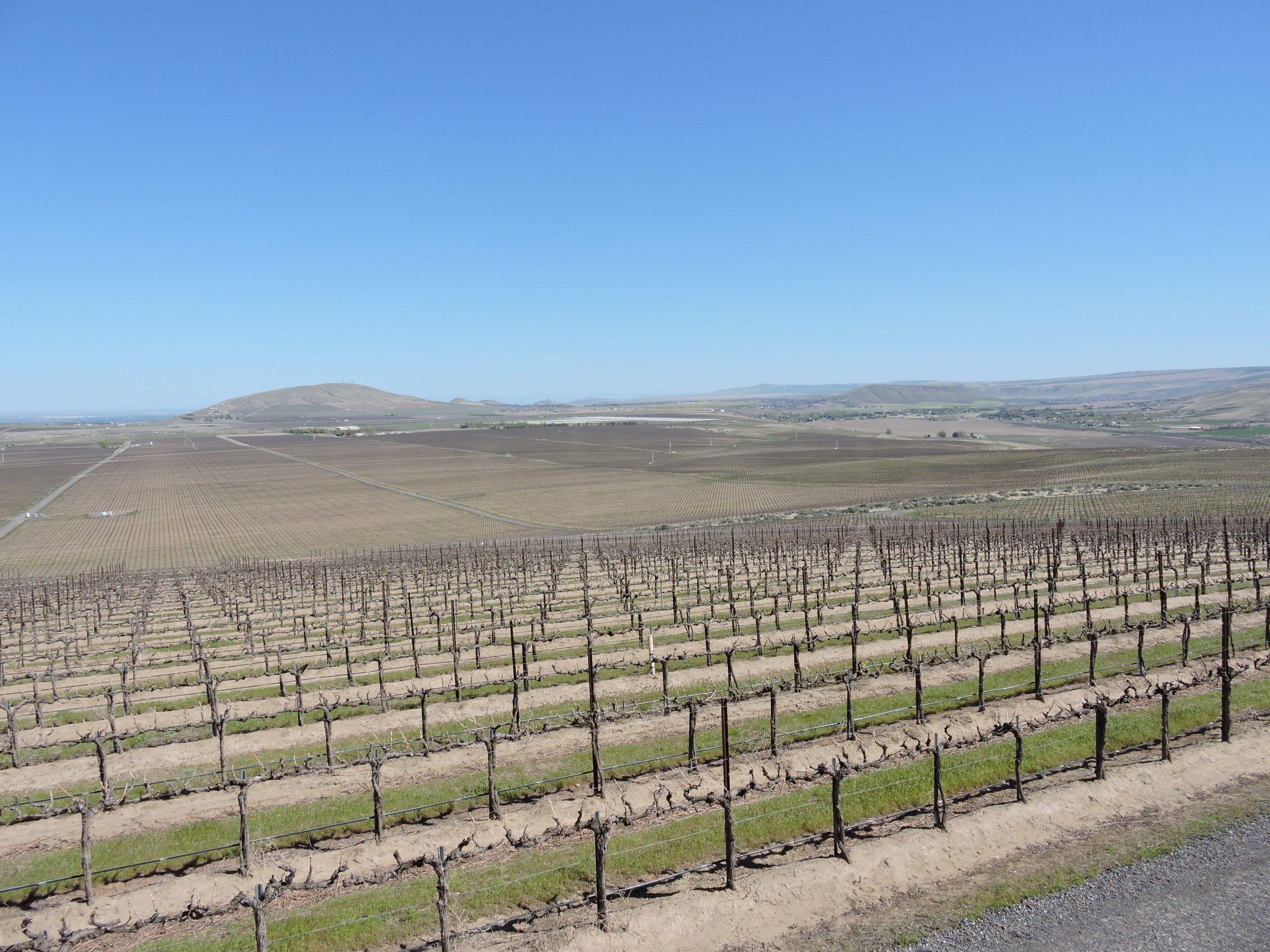 Top of Goose Ridge winery