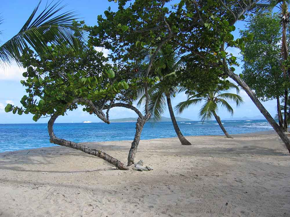 Heart-shaped tree, Palm Island, Grenadines