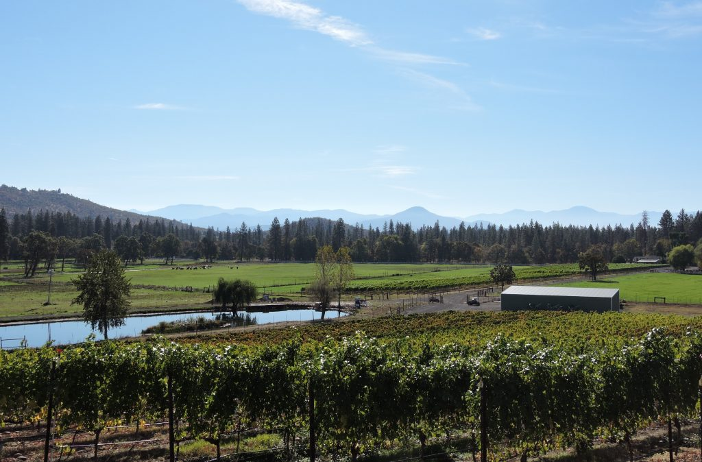 View of vineyards and cow pastures