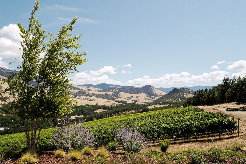 View of vineyards and mountains