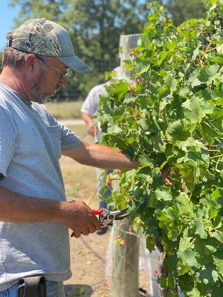 Brennan Vineyards, Harvest 2020