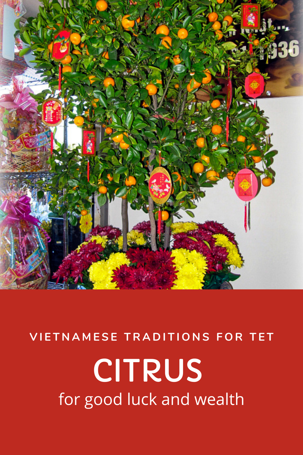 Lunar New Year tradition, citrus