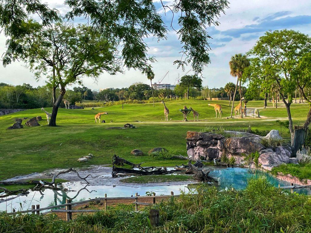 Giraffe Bar Busch Gardens