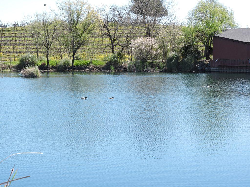 Pond at La Crema Estate