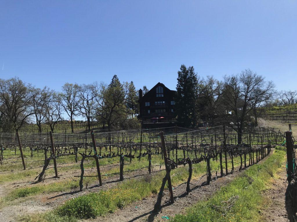 Vineyards Surrounding La Crema Estate