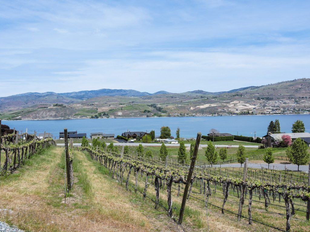 View of the lake from surrounding vineyards